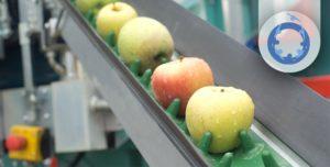 gestión de una empresa hortofrutícola